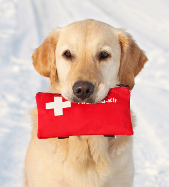 Preparing Your Dog for Disasters