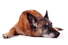 canine arthritis treatment