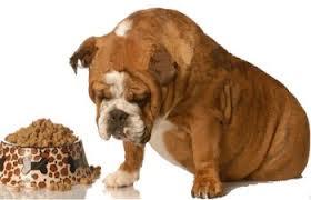 Dog Liver Disease