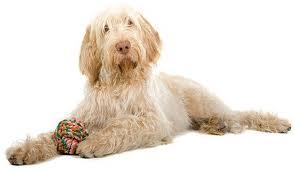 Italian Dog Breeds