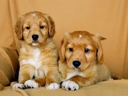 puppy care guide